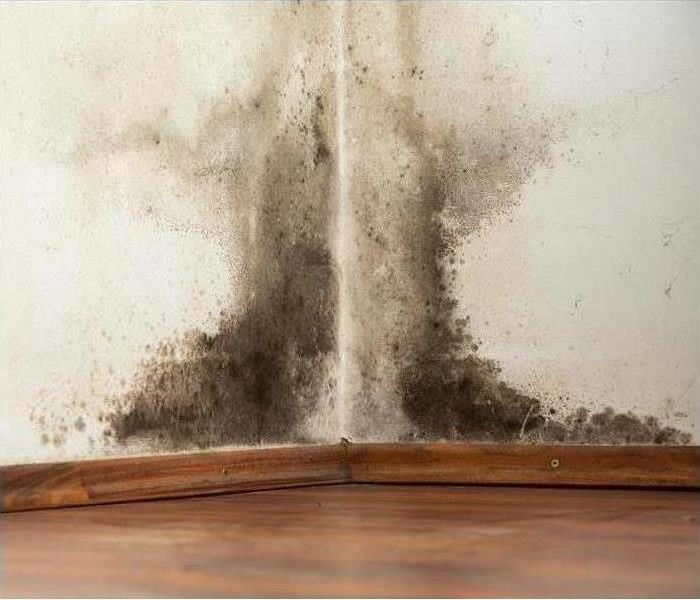 Mold Remediation Managing Mold in your Cumberland County Home.