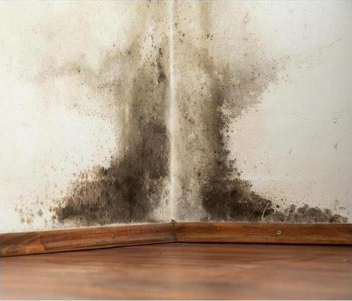 Mold Remediation Does Your Cumberland County Home Have a Mold Problem?